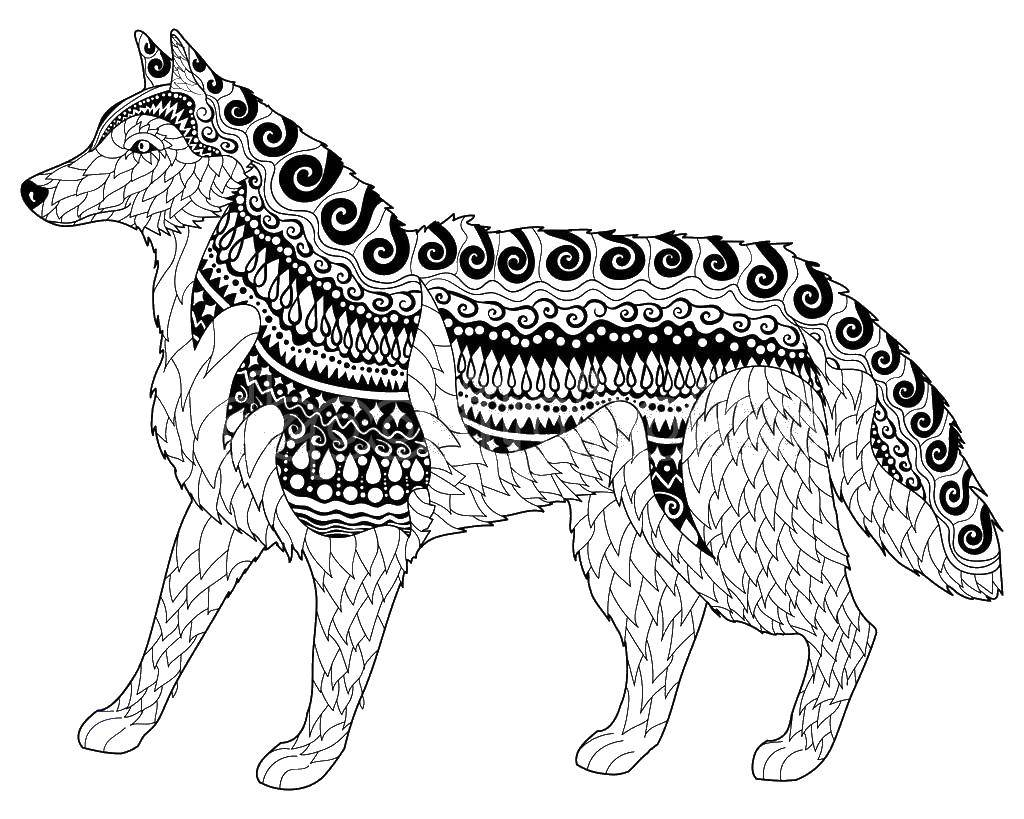 Раскраска Собака в узорах Скачать собака в узорах, собака хаски.  Распечатать ,собаки хаски,