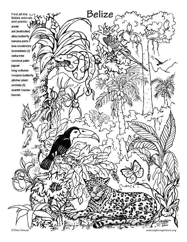 Раскраска Природа Скачать Персонаж из мультфильма, Бен Тен.  Распечатать ,Персонаж из мультфильма,