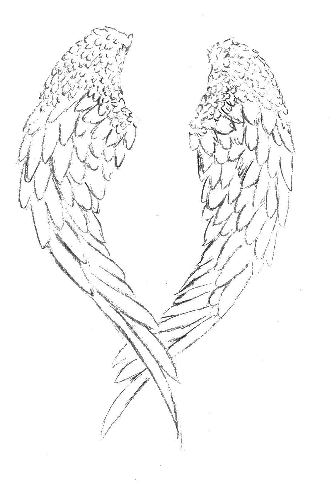 Раскраска Крылья ангела Скачать ,крылья ангела,.  Распечатать