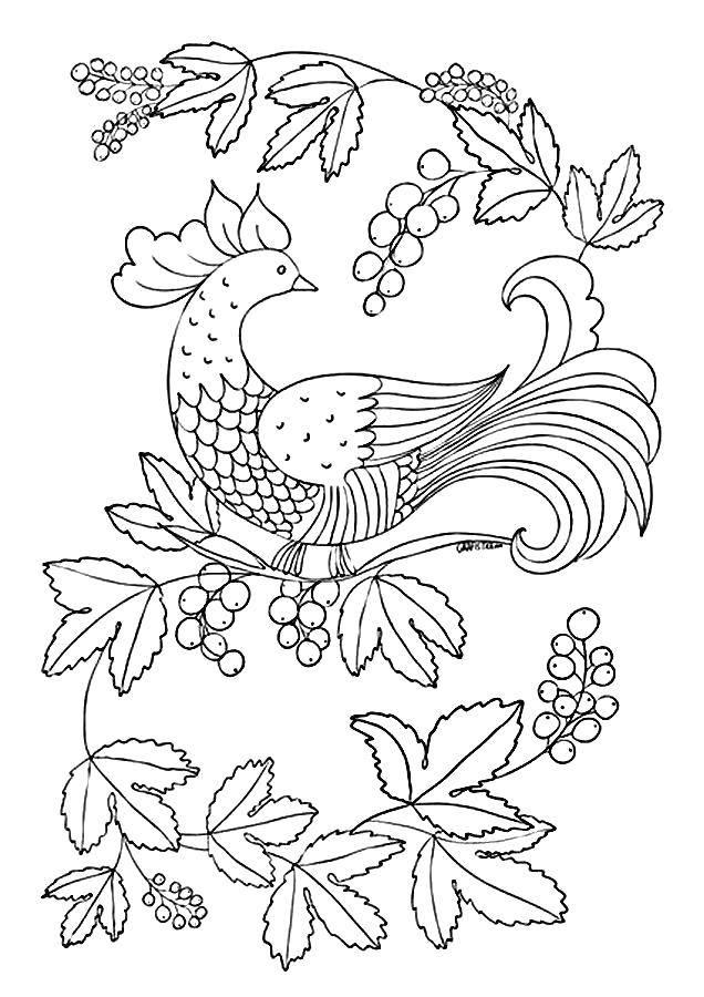 Раскраска Павлин смотрит на ягоды Скачать Птицы, павлин.  Распечатать ,птицы,