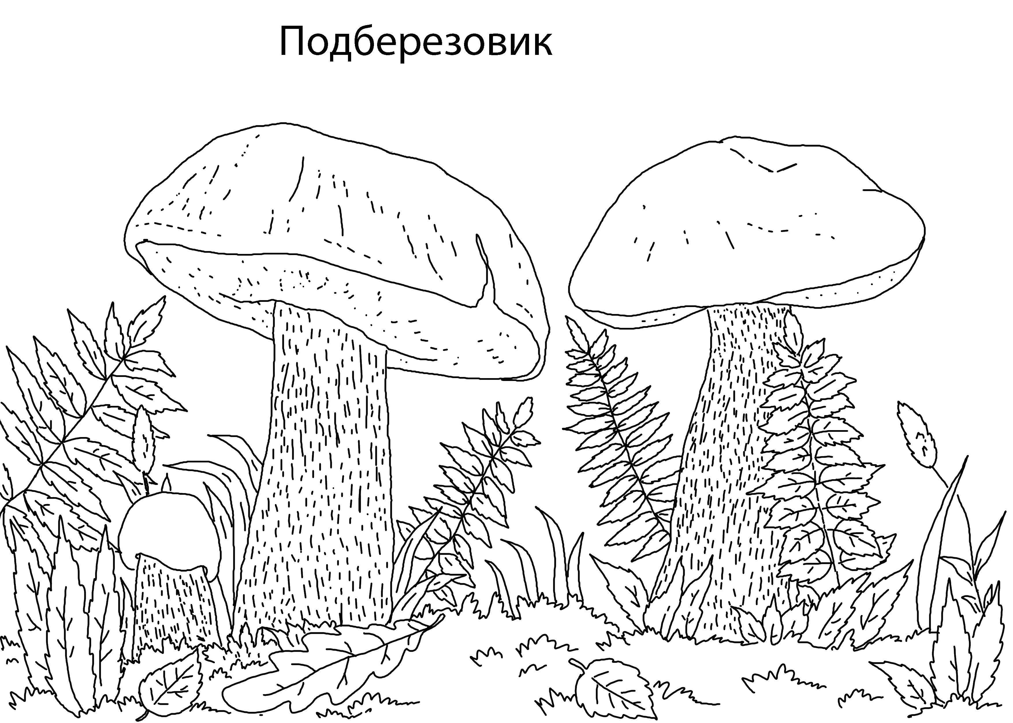 Раскраска грибы Скачать ,Октонавты, мультфильм,.  Распечатать