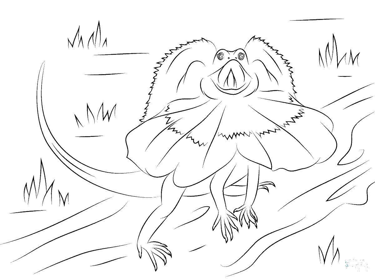 Раскраска рептилии Скачать .  Распечатать