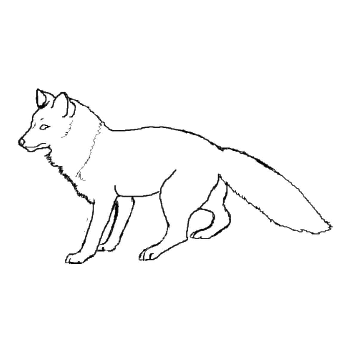 Раскраска Красивая лисичка Скачать Животные, лиса.  Распечатать ,Лисица,