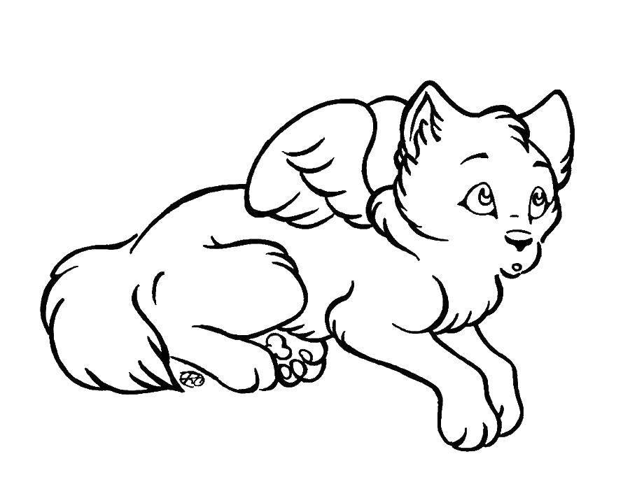 Раскраска Крылатый пёсик Скачать Животные, собака.  Распечатать ,Волшебные создания,