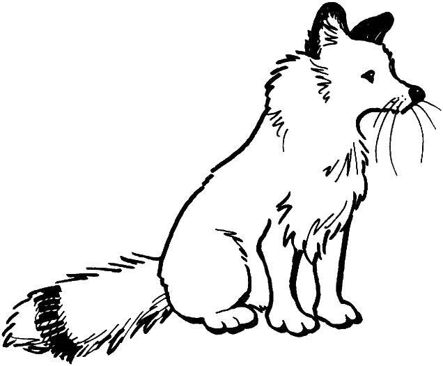 Раскраска Пушистый хвостик Скачать Животные, лиса.  Распечатать ,Лисица,