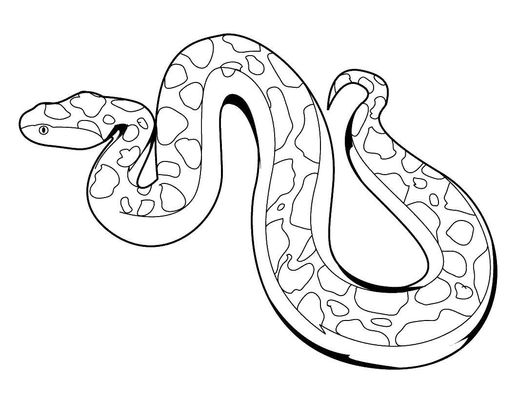 Раскраска змея Скачать майнкрафт, люди.  Распечатать ,майнкрафт,