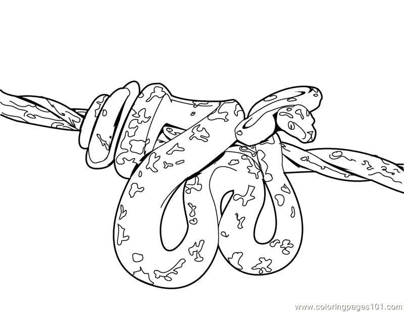 Раскраска змея Скачать ,предметы, лишнее,.  Распечатать