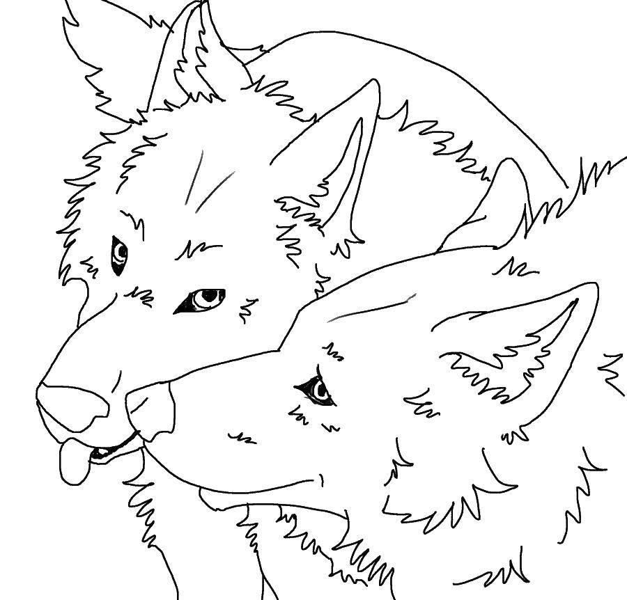 раскраски раскраска волк и волчица скачать распечатать