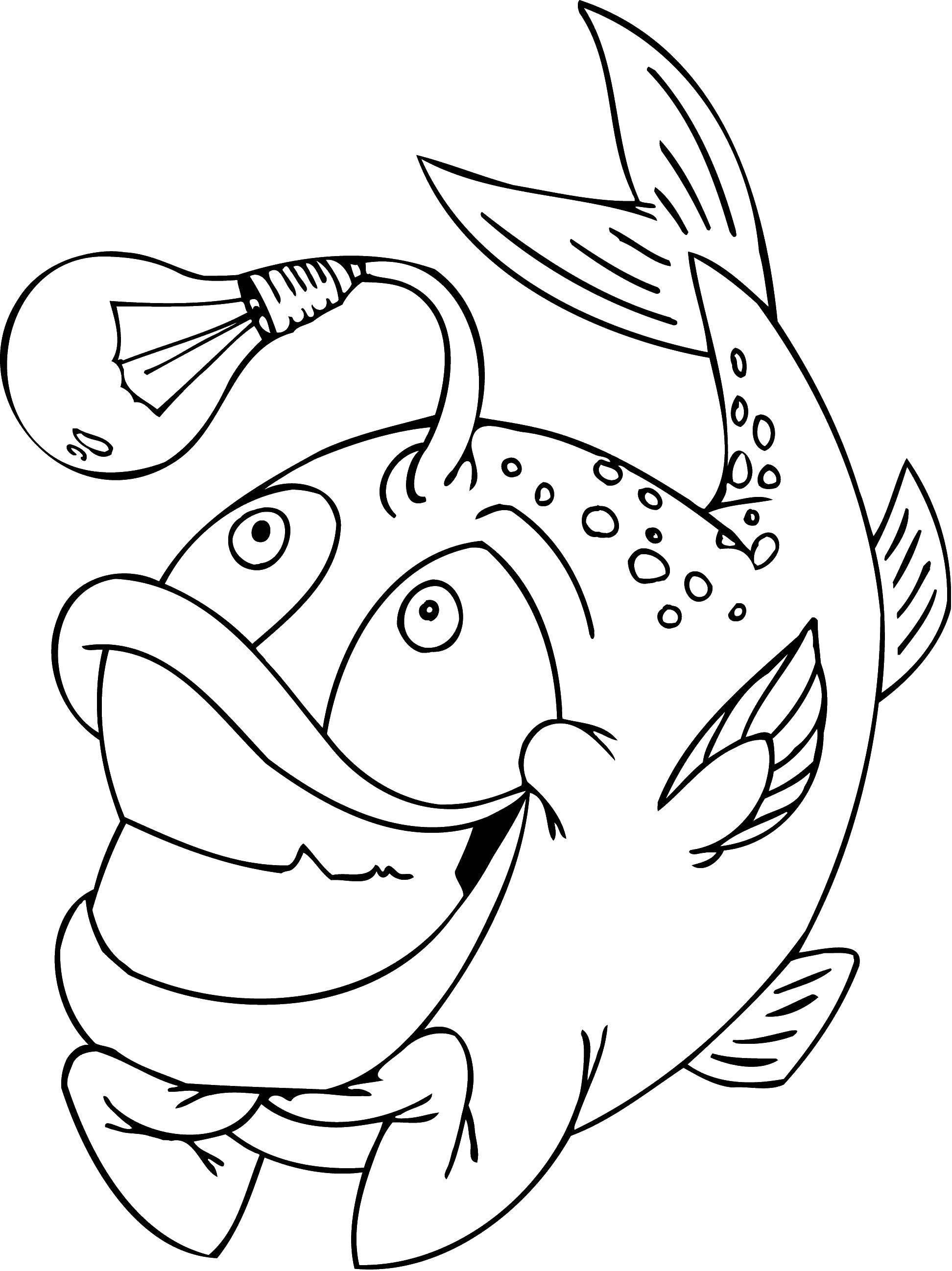 Раскраска Европейский удильщик морской чёрт с фонариком Скачать Подводный мир, рыба.  Распечатать ,морское,