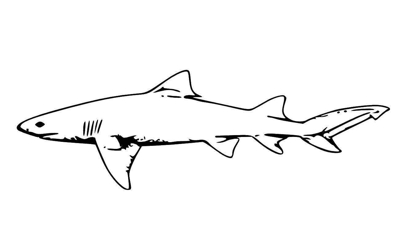 Раскраска Акулы Скачать ,примеры, математика, кошка, номера,.  Распечатать