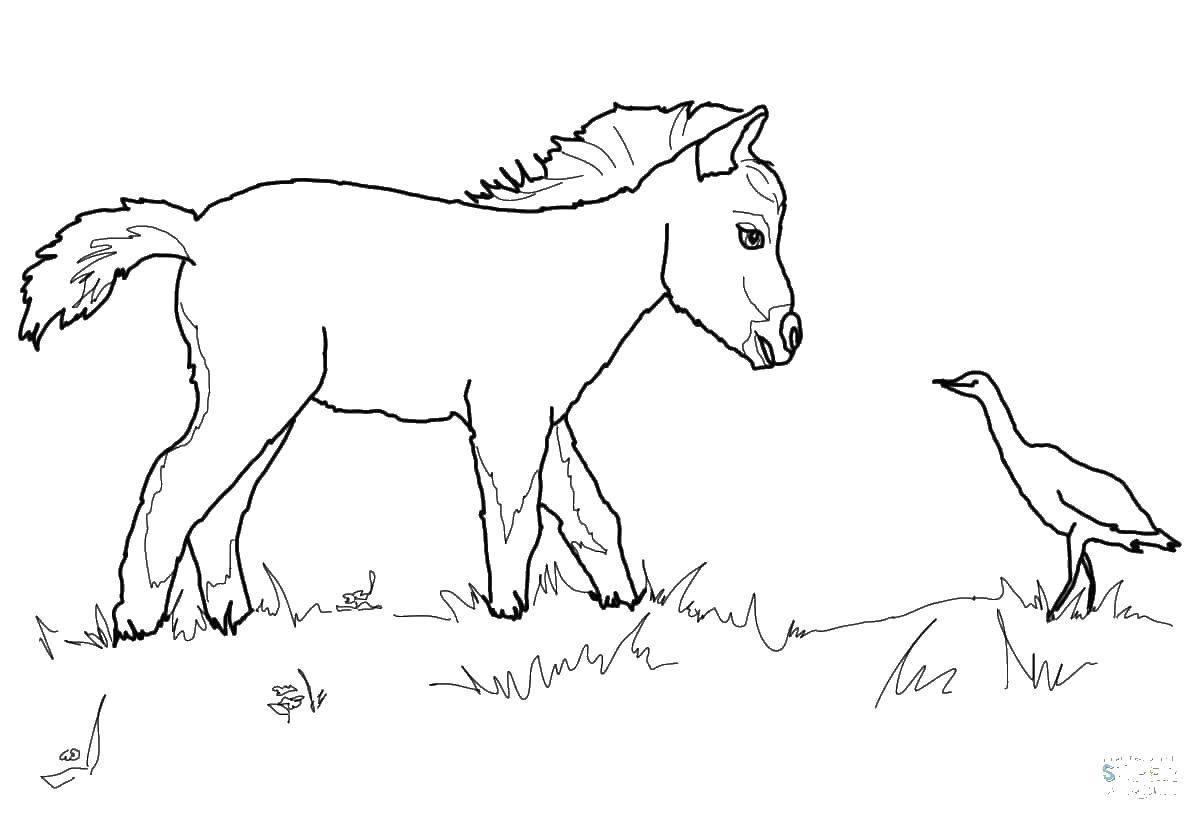 Раскраска Животные Скачать мой маленький пони.  Распечатать ,мой маленький пони,
