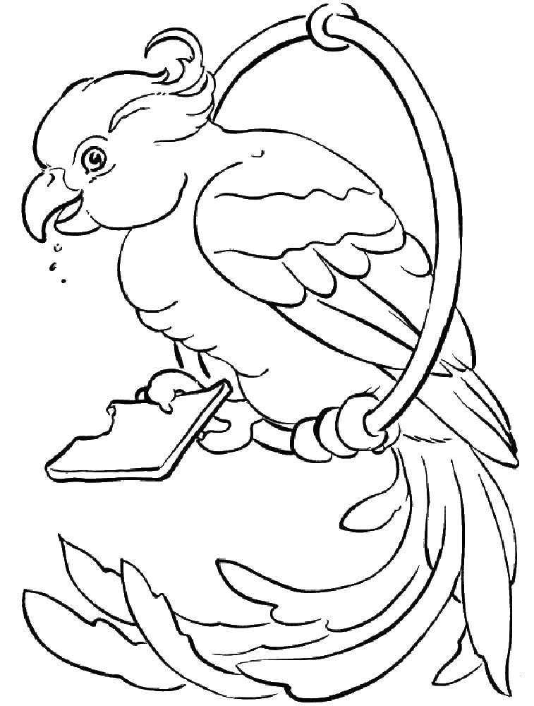 Раскраска птицы Скачать Узор, животные, сова.  Распечатать ,раскраски антистресс,
