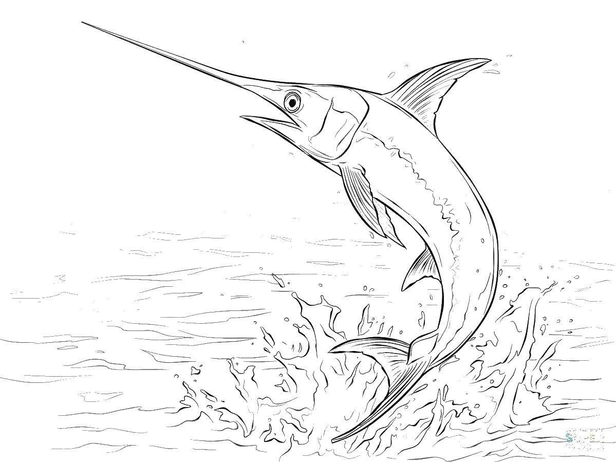 Раскраска Рыба меч Скачать рыбы, рыба меч, морские обитатели.  Распечатать ,рыбы,