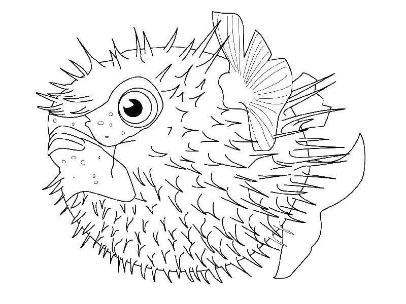 раскраски раскраска рыба еж надулась раскраски раскраски