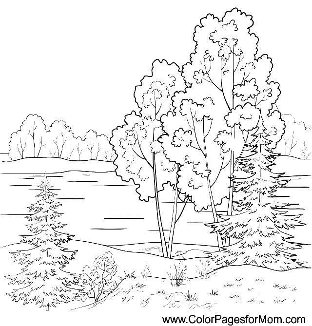 Раскраска Деревья у реки Скачать ,природа, деревья, река,.  Распечатать