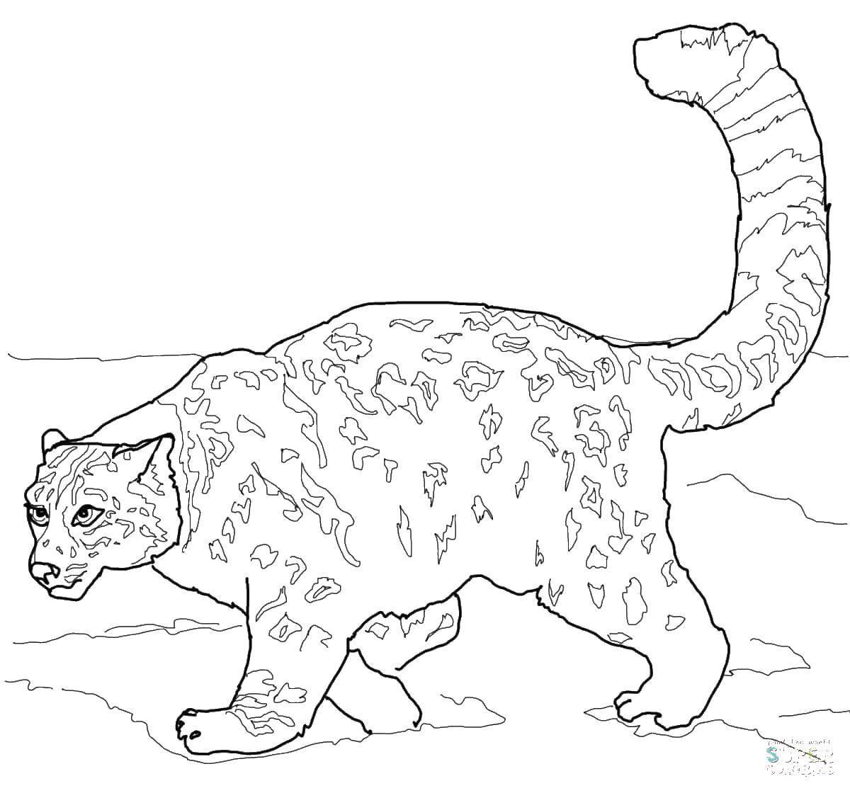 Раскраска Гепард с пышным хвостом Скачать животные, гепарды, кошки.  Распечатать ,Животные,