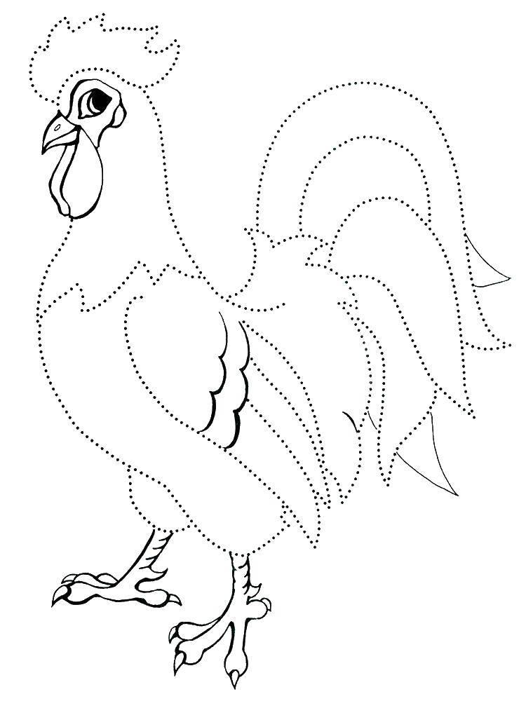 Раскраска Контур петушка Скачать контуры, птицы, петух.  Распечатать ,Контуры птиц,