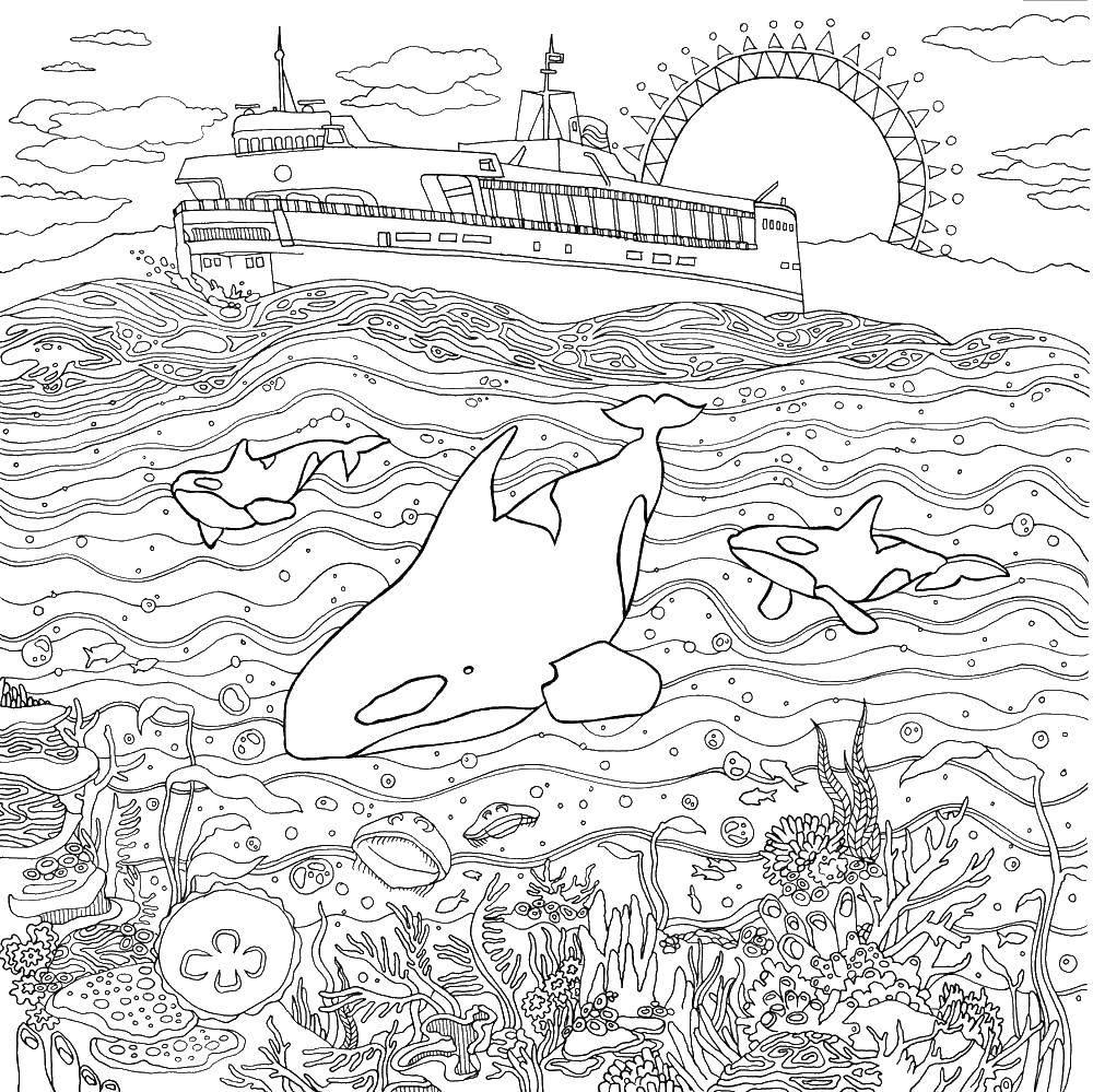 Раскраска Корабль и подводный мир Скачать море, вода, подводный мир, дельфины, корабль.  Распечатать ,Морской мир,