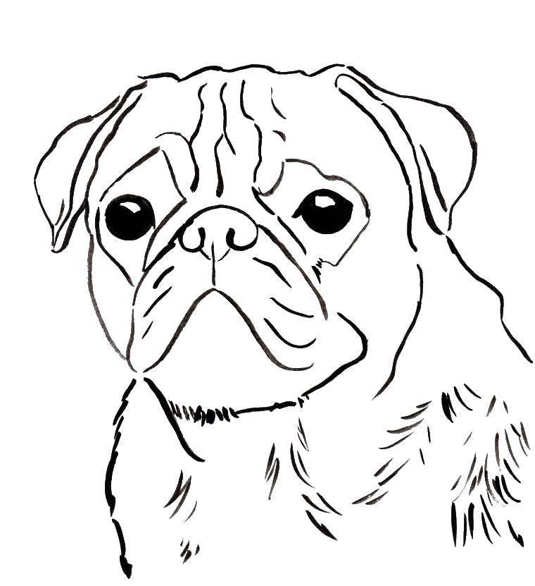 Раскраска собаки Скачать ,Школа, ученик, портфель,.  Распечатать