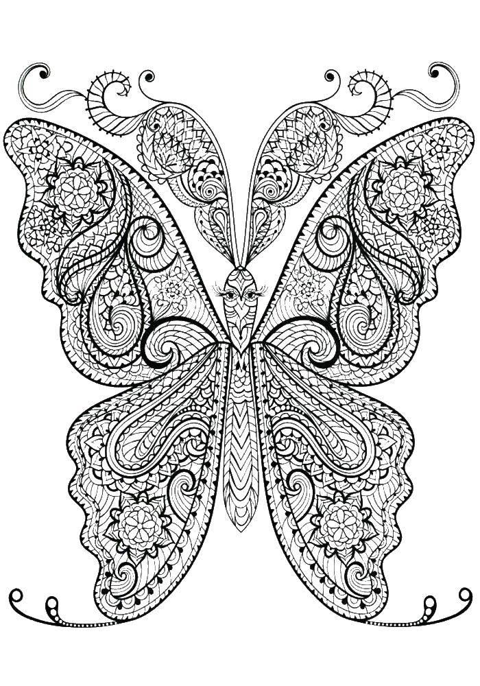 Раскраска Очень красивая узорчатая бабочка Скачать бабочки, крылья, узоры, антистресс.  Распечатать ,бабочки,