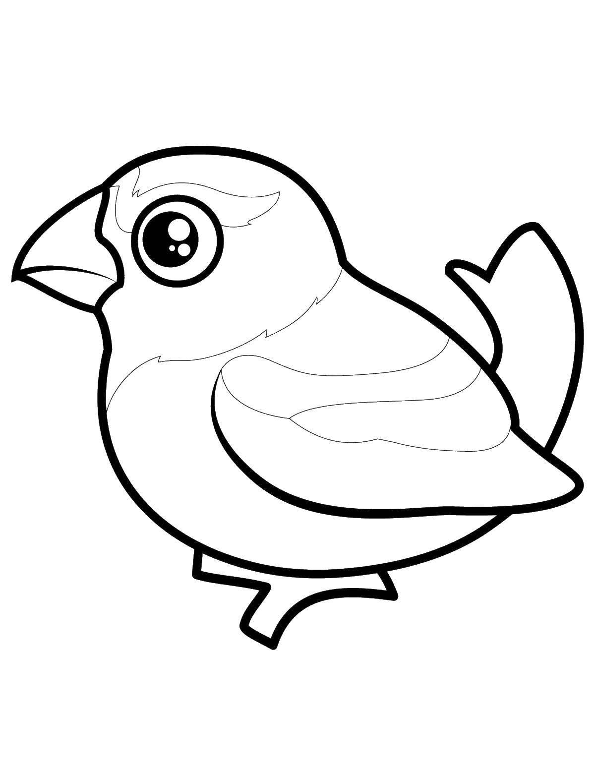 Раскраска Птичка с большими глазами. Скачать птицы, птица.  Распечатать ,птицы,