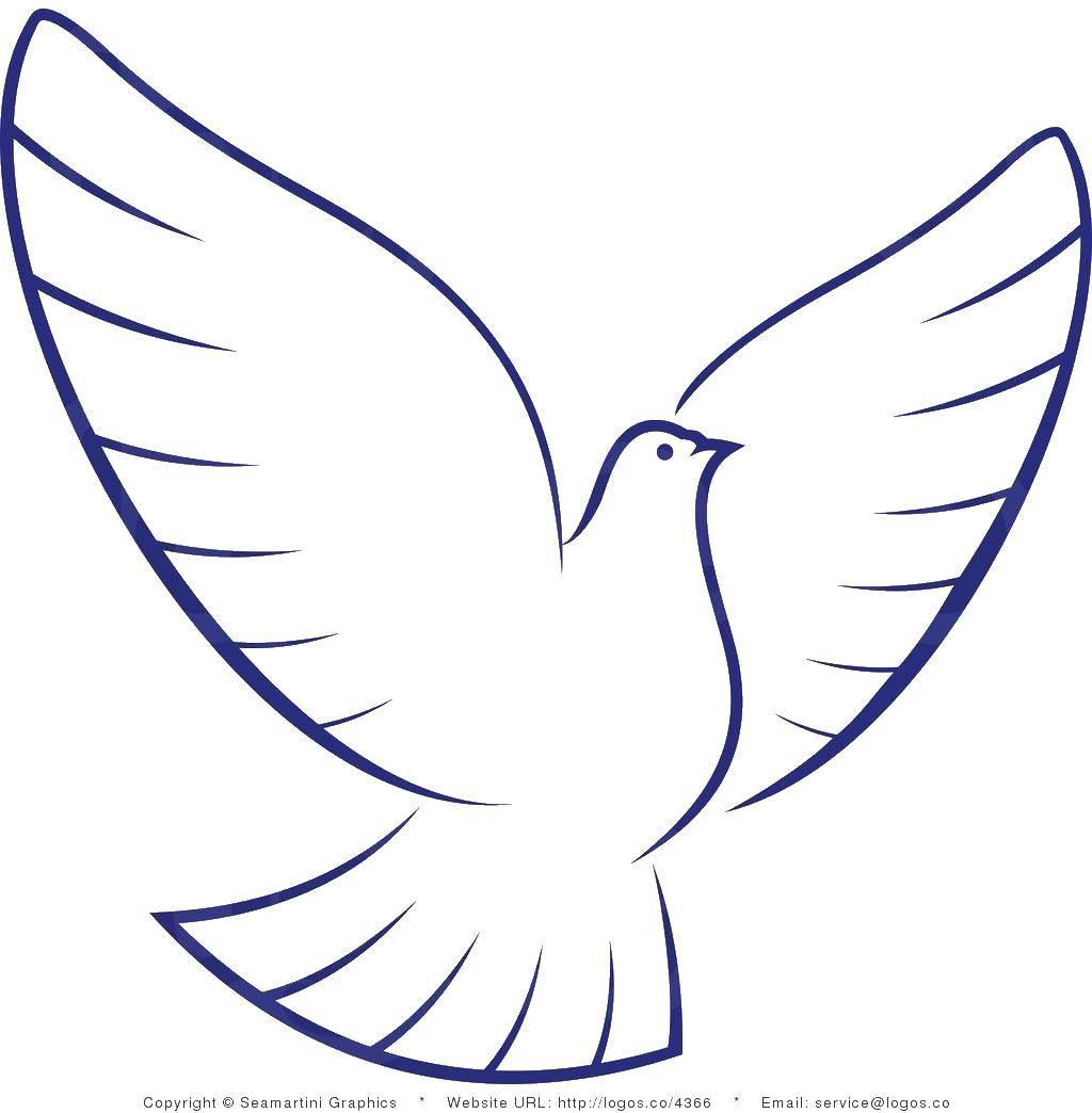 Раскраска Птица распахнула крылья Скачать птицы, голуби.  Распечатать ,птицы,
