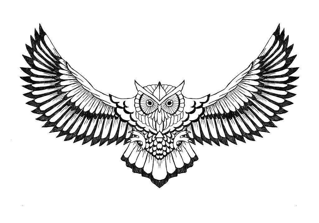 Раскраска Сова в полете Скачать ,совы, полет, крылья,.  Распечатать