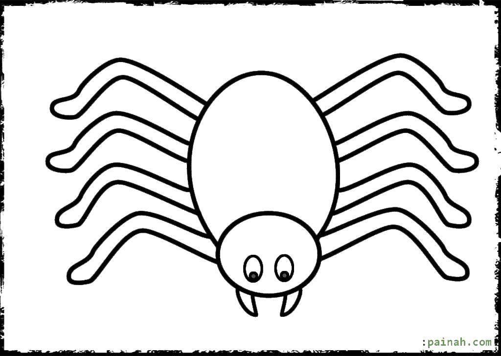 Раскраска Восьминогий паук Скачать пауки, паук, насекомое.  Распечатать ,пауки,