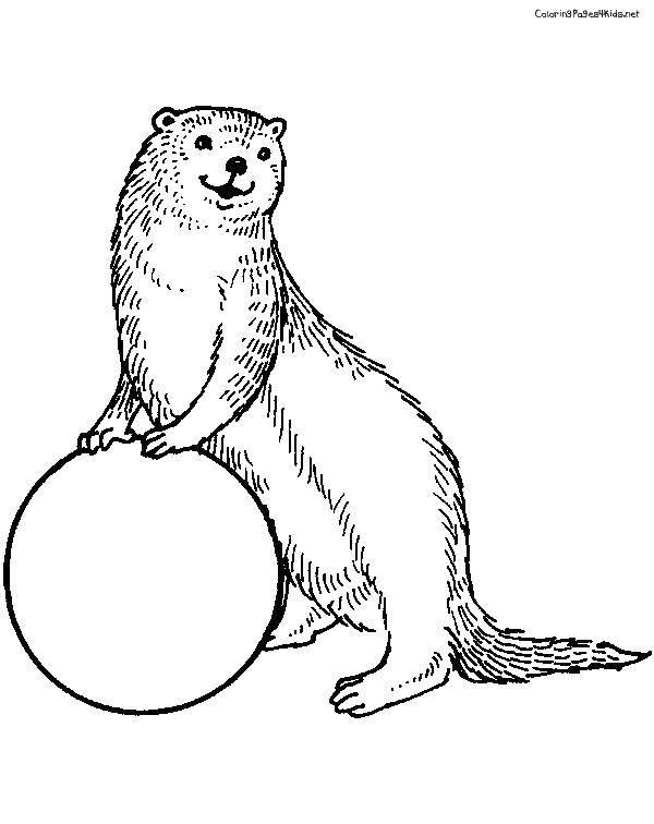Название: Раскраска Выдра с мячом. Категория: Животные. Теги: животные, выдра.