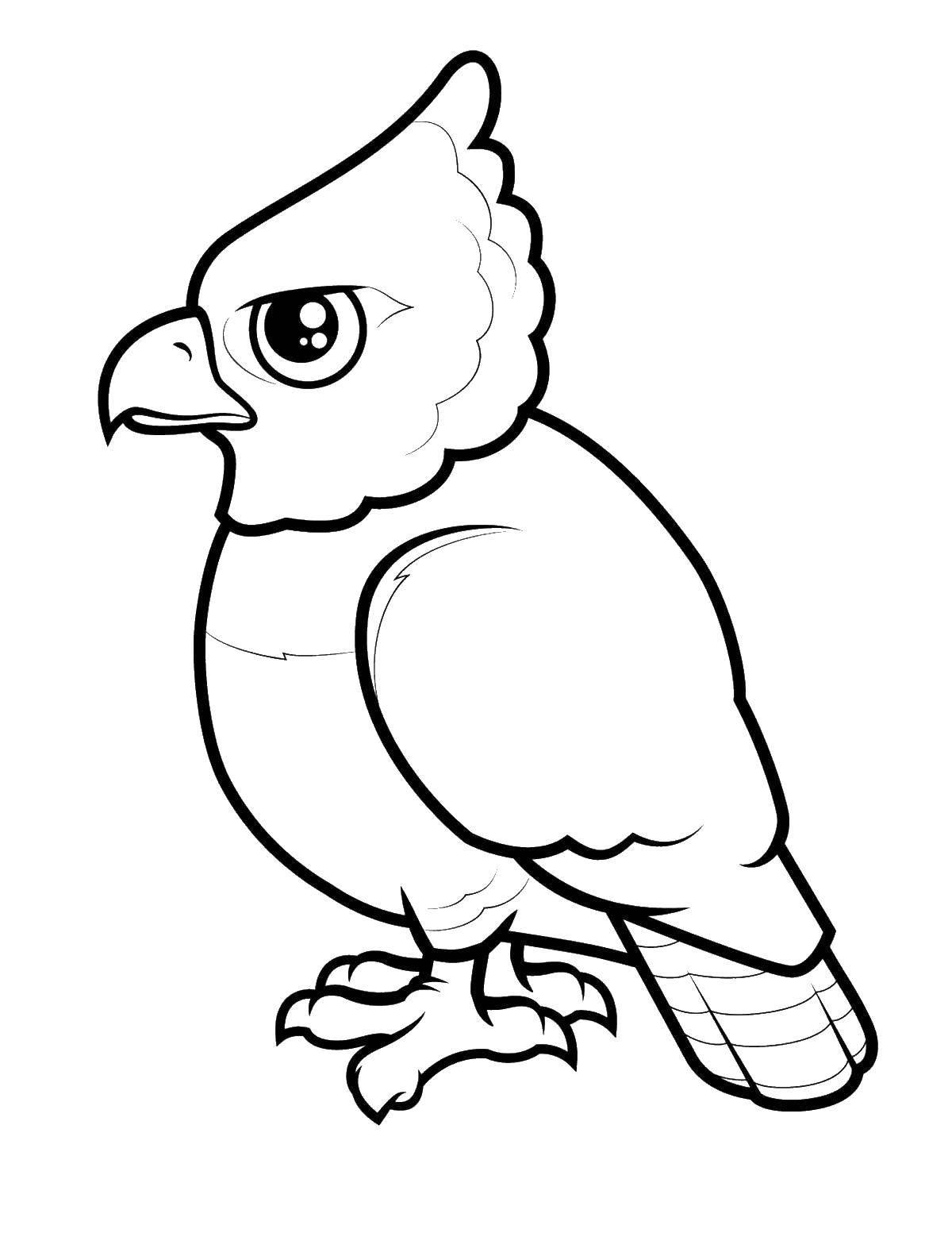 Раскраска Злой попугай Скачать птицы, попугай.  Распечатать ,птицы,