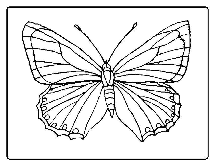 Раскраска бабочка Скачать Свинка Пеппа.  Распечатать ,Свинка Пеппа,