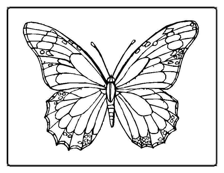 Раскраска Бабочка красивая Скачать бабочки, насекомые, крылышки.  Распечатать ,Бабочка,