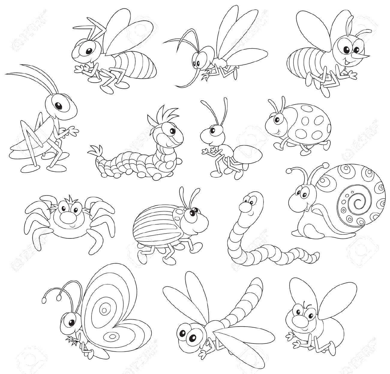 раскраски насекомые раскраска самые разные насекомые насекомые