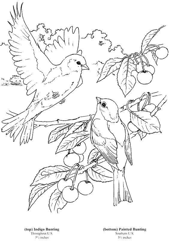 Раскраска Птички любят ягоды Скачать Птицы.  Распечатать ,Птицы,