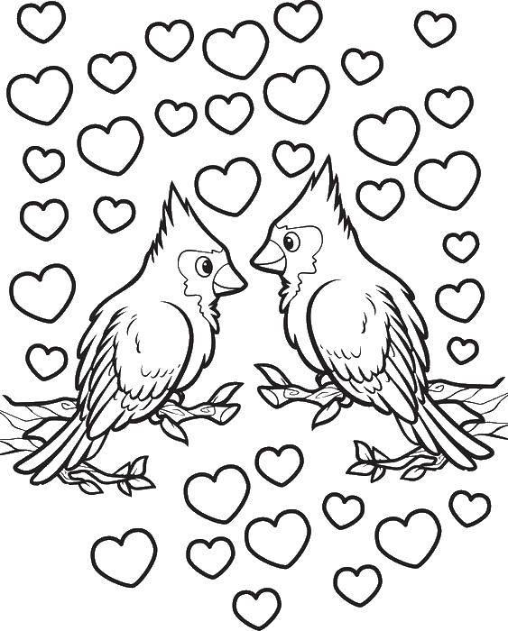 Раскраска Сильная любовьп тичек Скачать Сердечко, любовь.  Распечатать ,Птицы,
