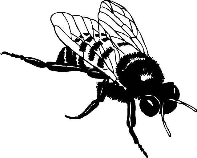 Раскраска Контуры насекомые Скачать поросенок, ванна, утёнок.  Распечатать ,Ванная комната,
