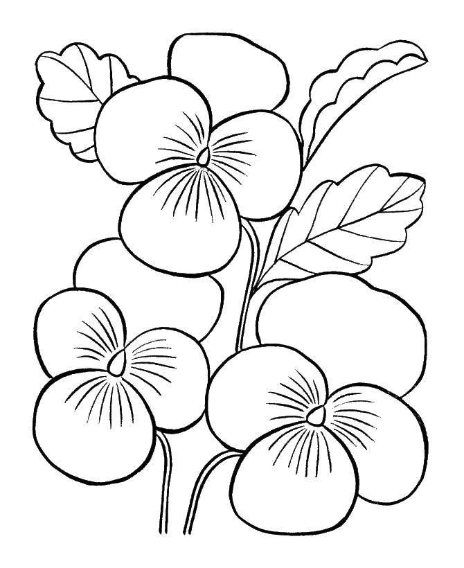 Раскраска Красивые анютины глазки Скачать Цветы.  Распечатать ,раскраски,