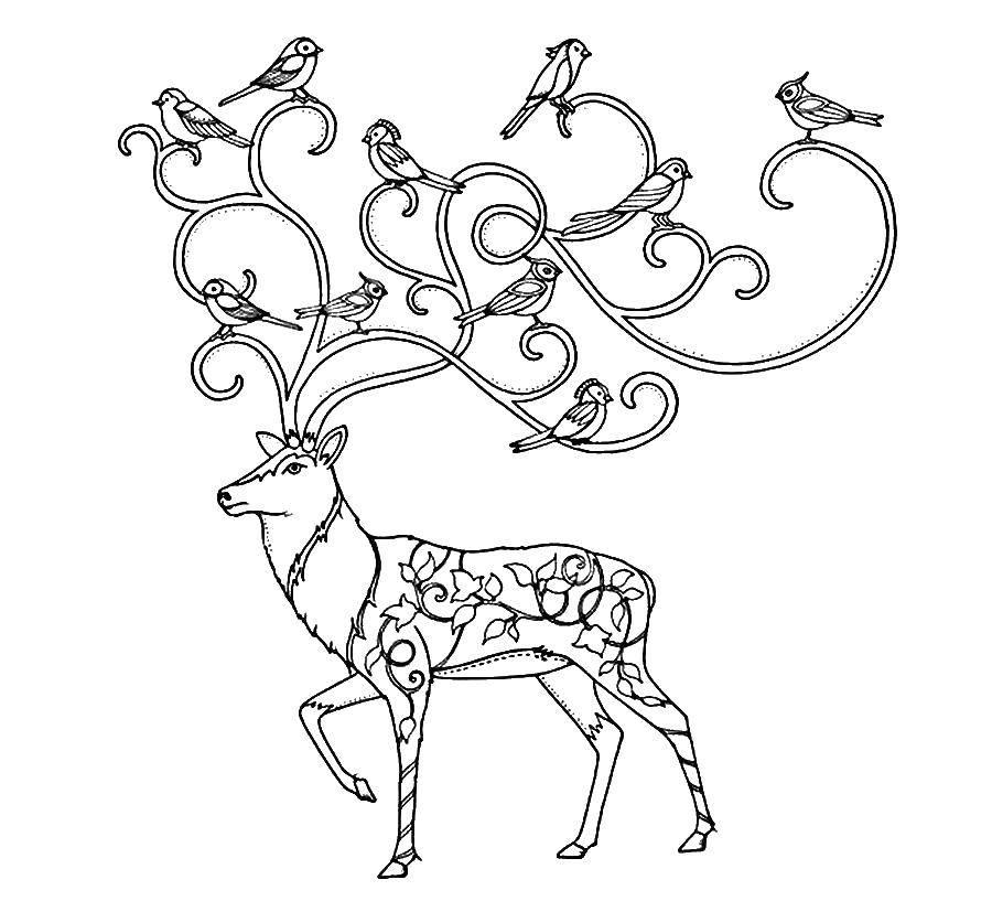Раскраска Птицы на рогах оленя Скачать Антистресс.  Распечатать ,раскраски антистресс,