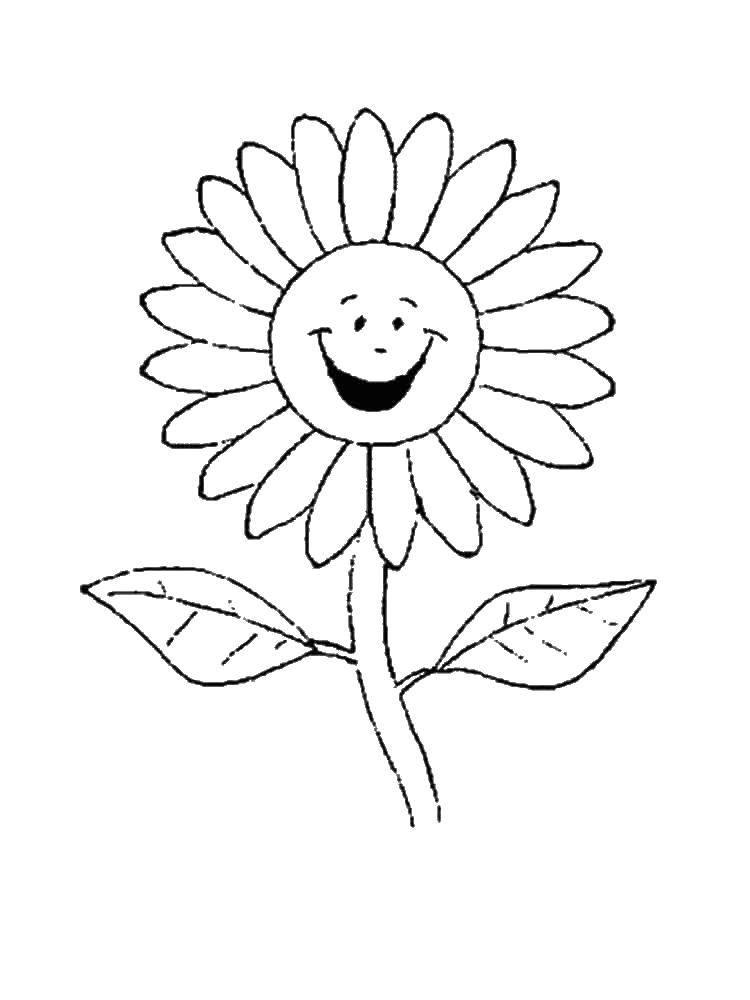 Раскраска Веселый цветочек Скачать ромашки, цветочки.  Распечатать ,раскраски,