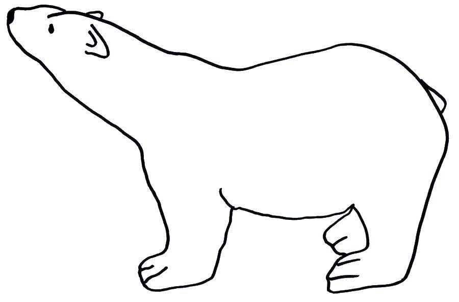 Раскраска Шаблон медведя Скачать контур, медведь, лапы.  Распечатать ,Контур медведя для вырезания,