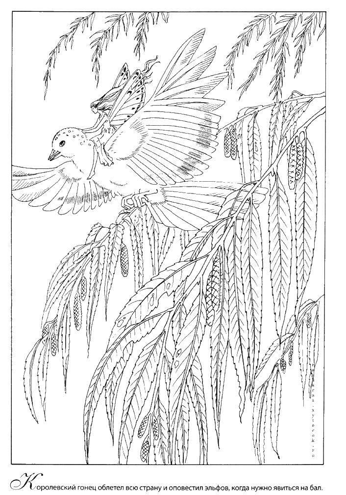 Раскраска Эльф на голубе. Скачать феи, голубь.  Распечатать ,феи,