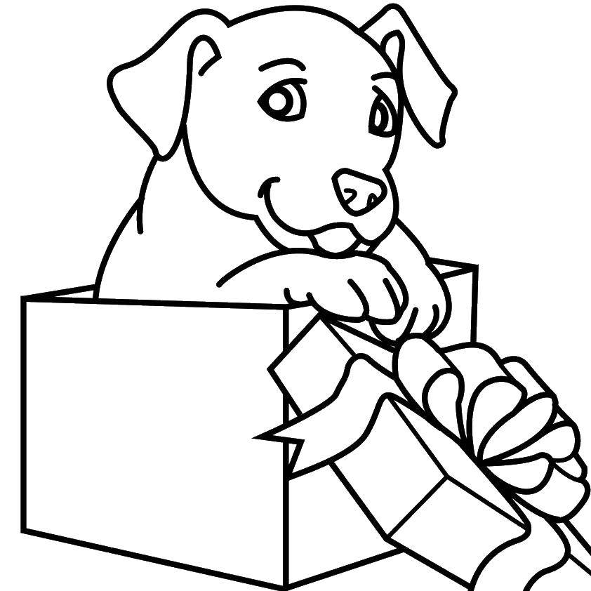 Раскраска Щенок в подарочной коробке. Скачать щенок, коробка, бантик.  Распечатать ,собаки,