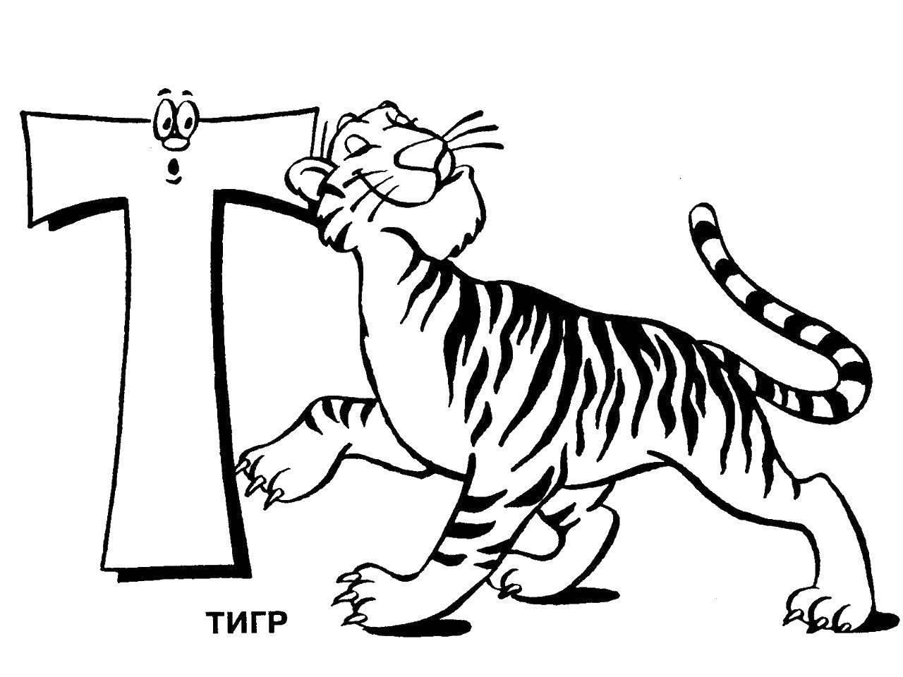 Раскраска Тигр на букву т. Скачать алфавит, тигр.  Распечатать ,алфавит,
