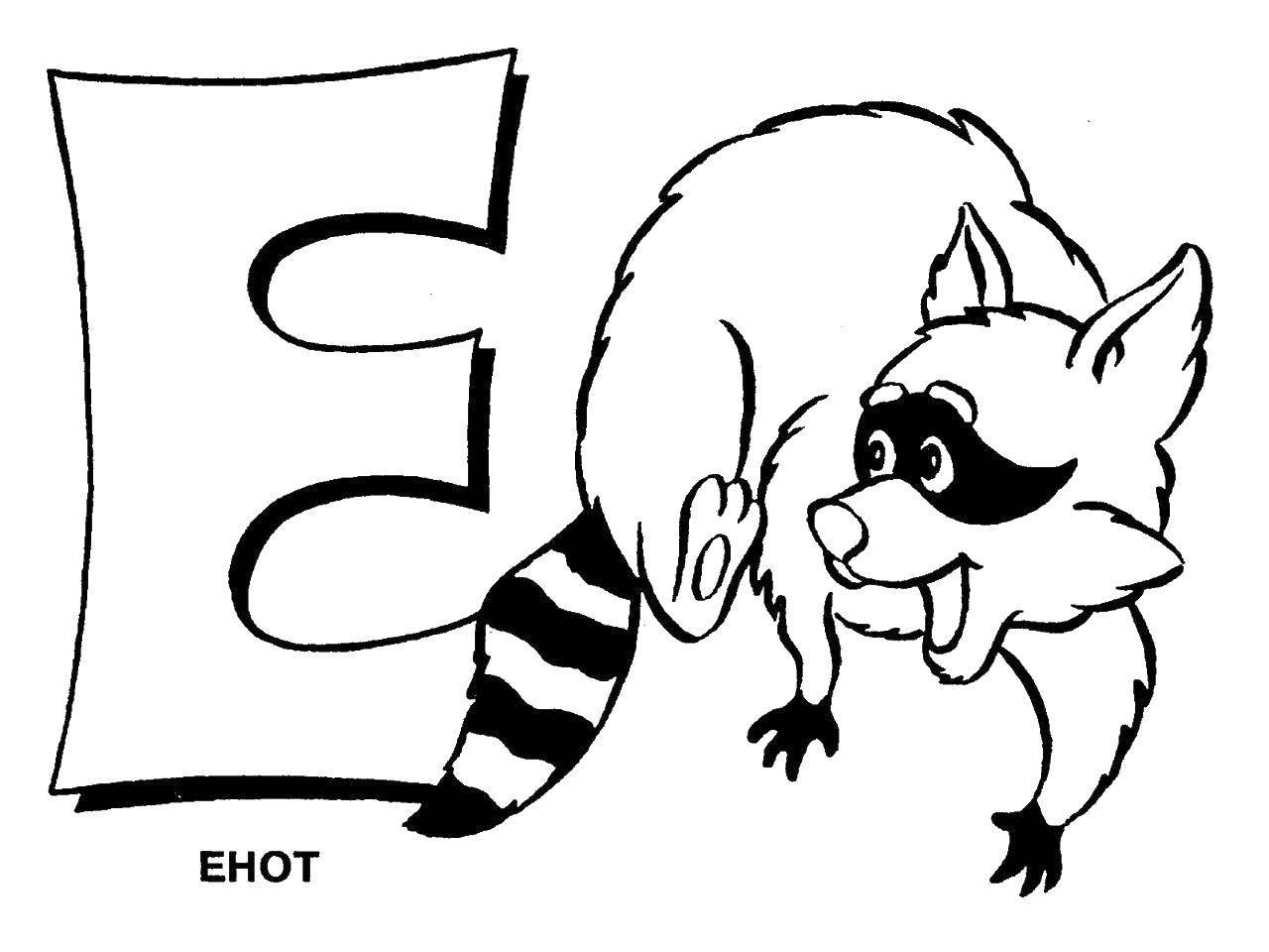 Раскраски букву, Раскраска Енот на букву е алфавит.