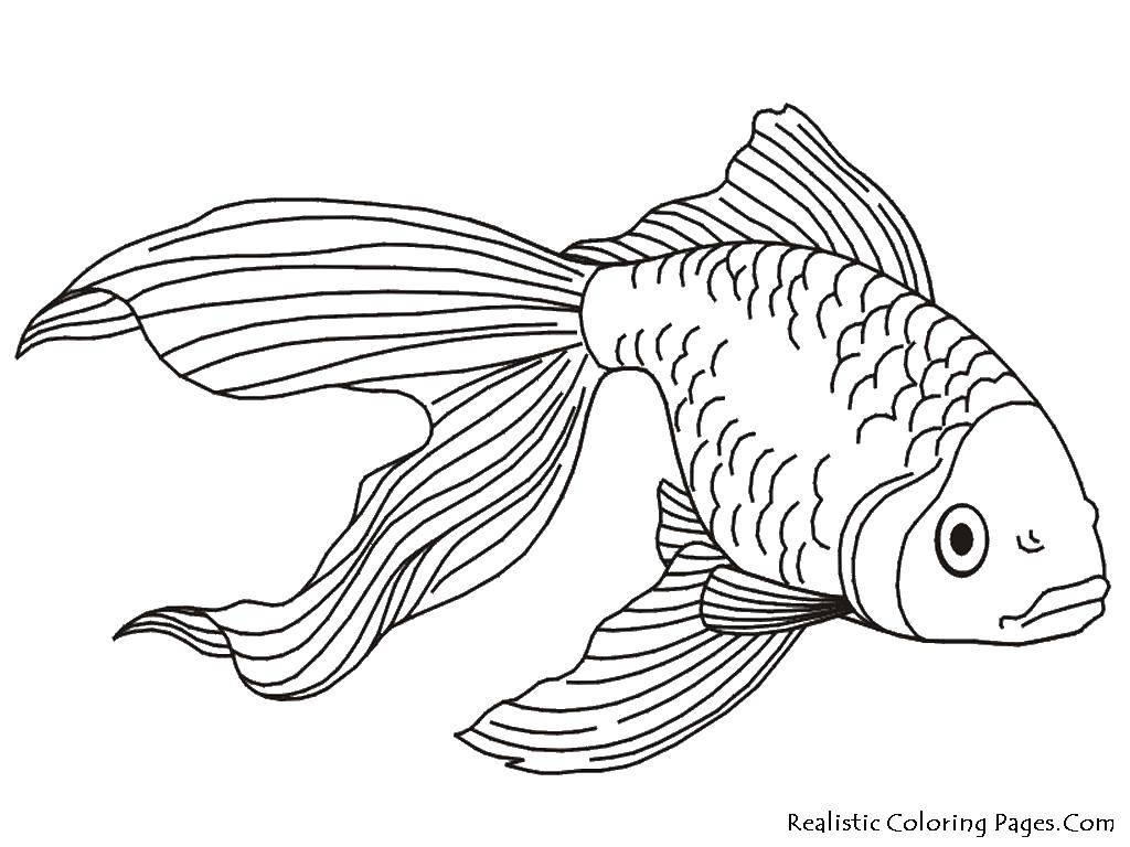 Раскраска рыбы Скачать диснеевские мультфильмы, Мини Маус, мышка.  Распечатать ,Диснеевские раскраски,