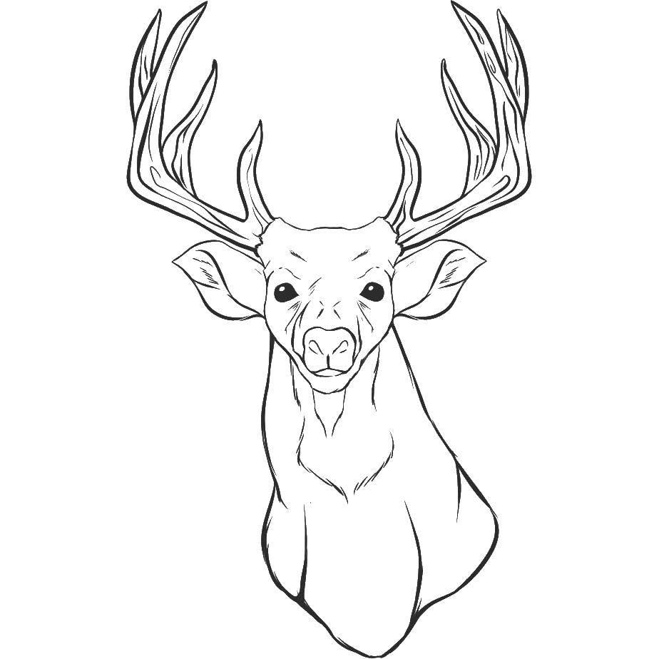 Раскраска Голова оленя Скачать голова, олень, рога.  Распечатать ,Животные,