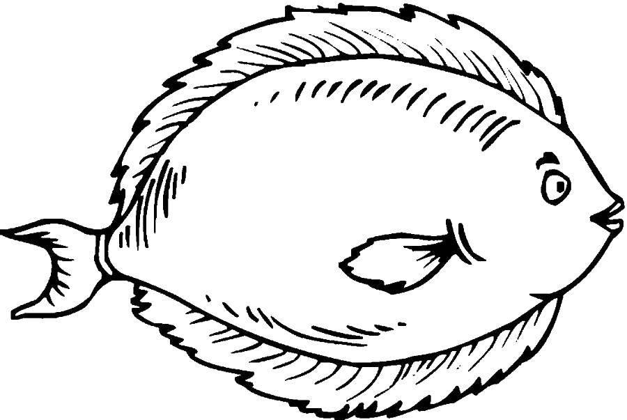 Раскраска рыбы Скачать Рождество, ёлочная игрушка, ёлка, подарки.  Распечатать ,Рождество,