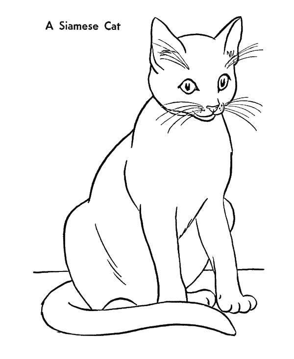 Раскраска Кошка Скачать Олимпиада.  Распечатать ,олимпийские игры,