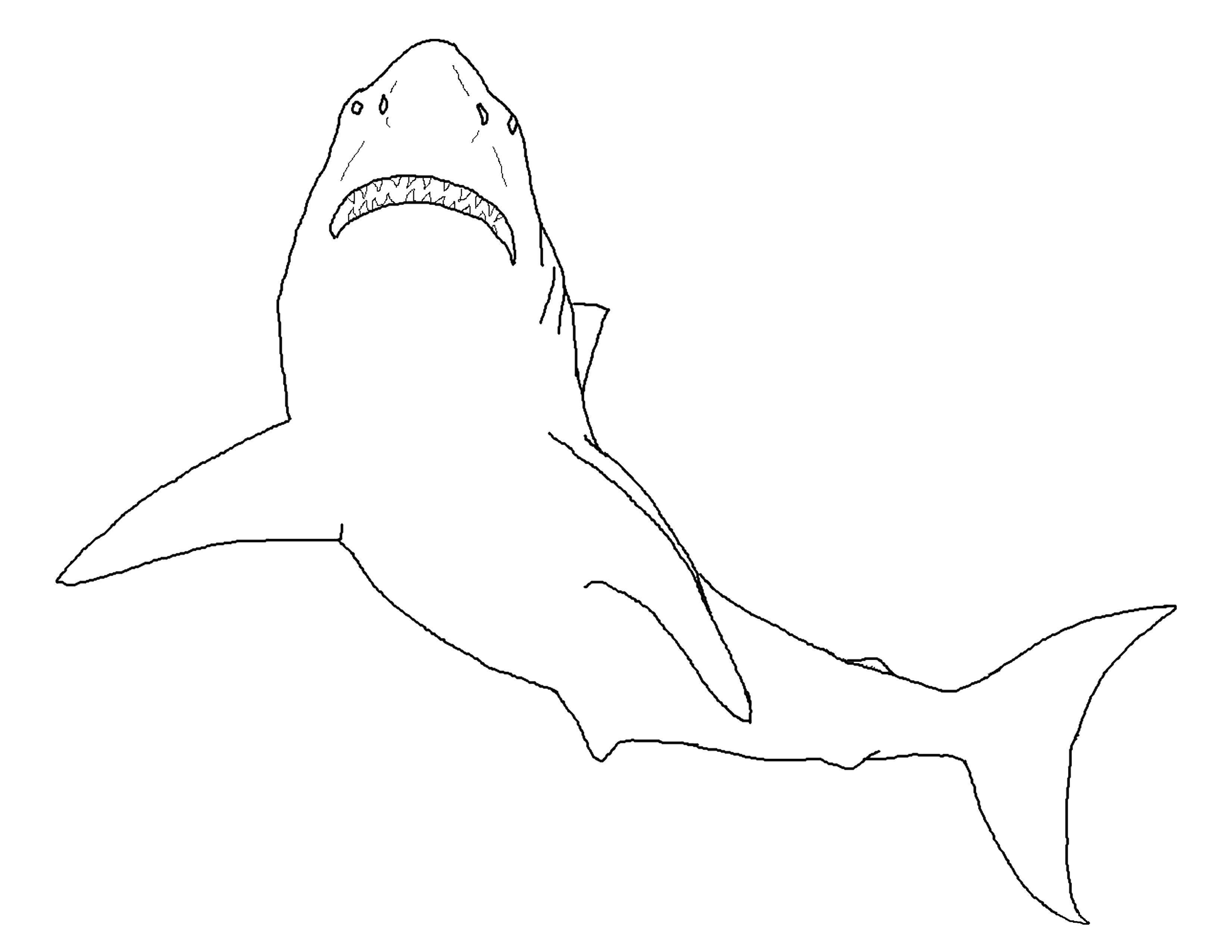 Раскраска Шаблон акулы для вырезания Скачать ,акула, контур,.  Распечатать