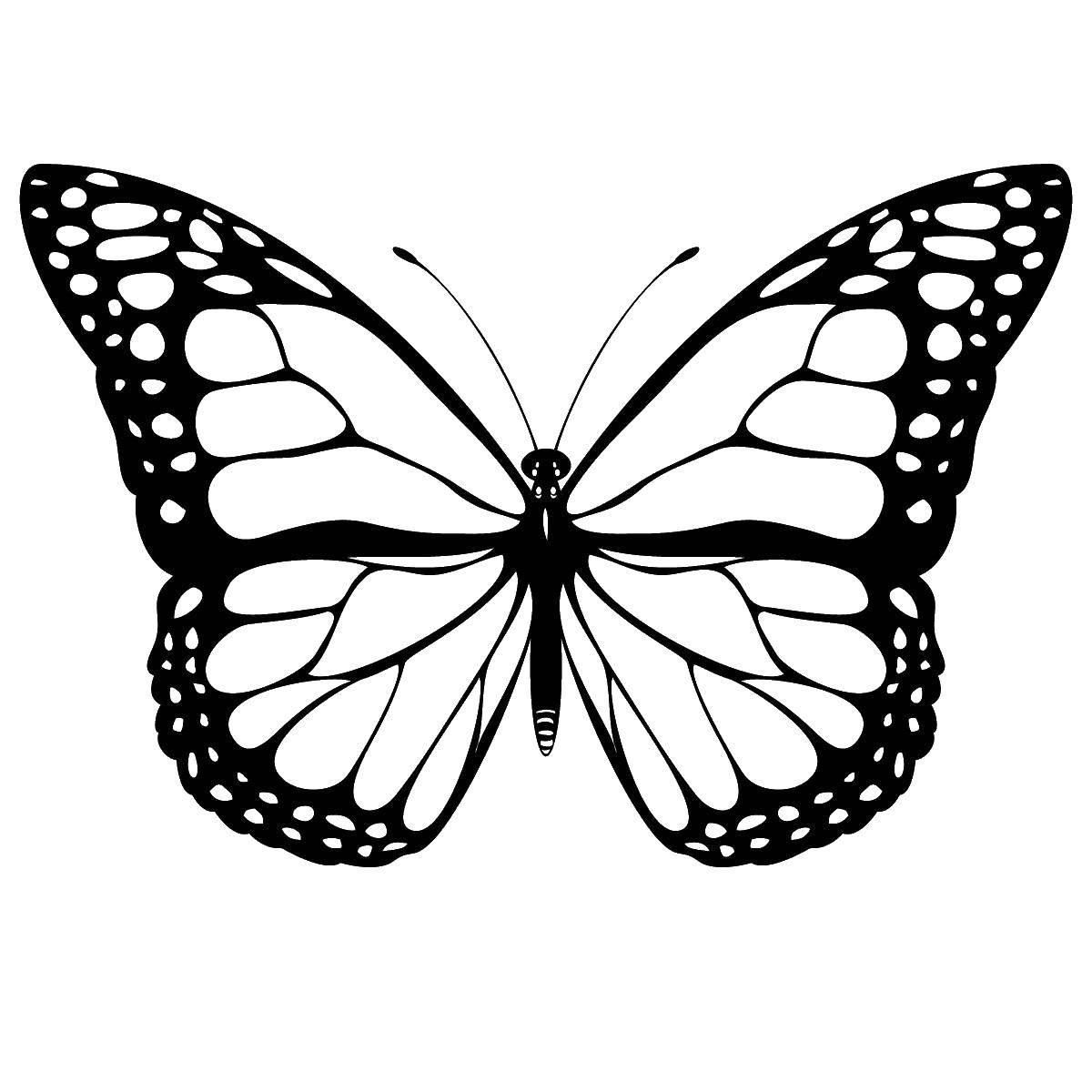 раскраски красивая раскраска красивая бабочка бабочка